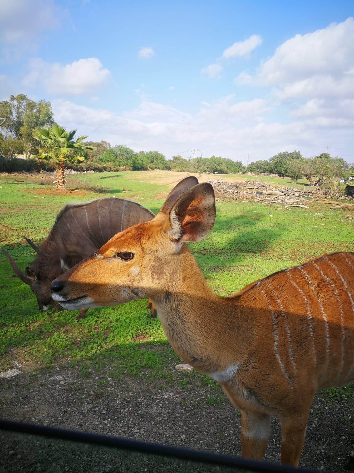 experiente tel aviv, Experiente Tel Aviv: Safari în  orașul contrastelor